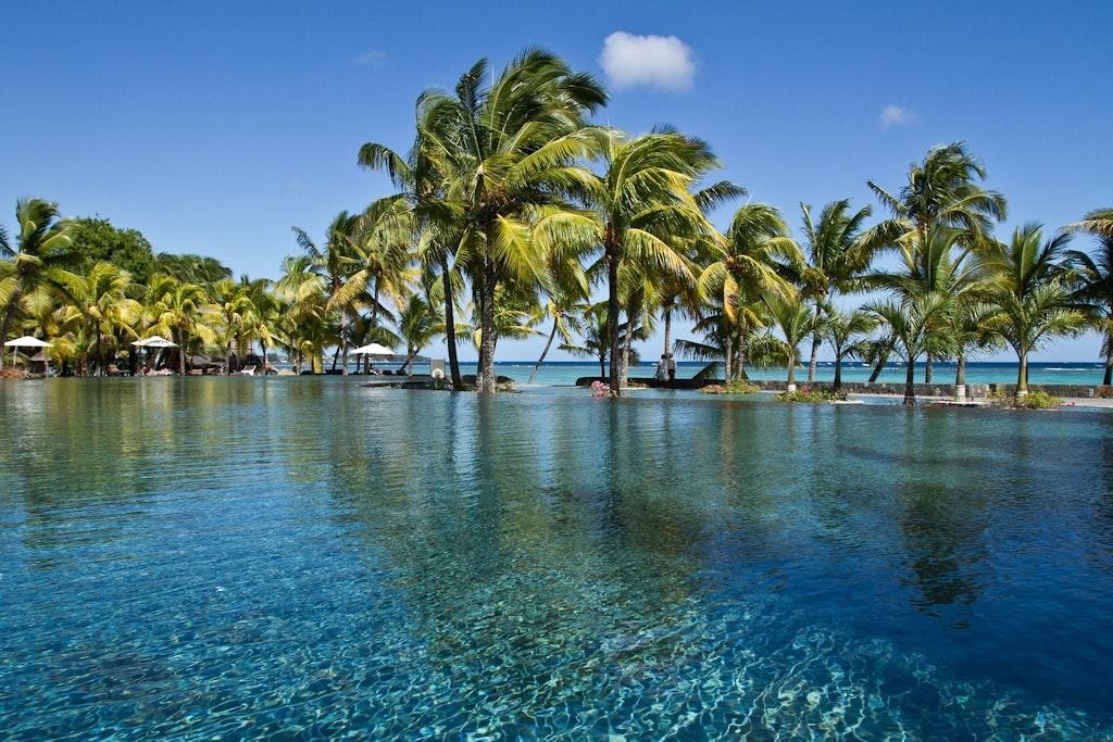 Mauritius Palm trees ( La Cambuse Beach)
