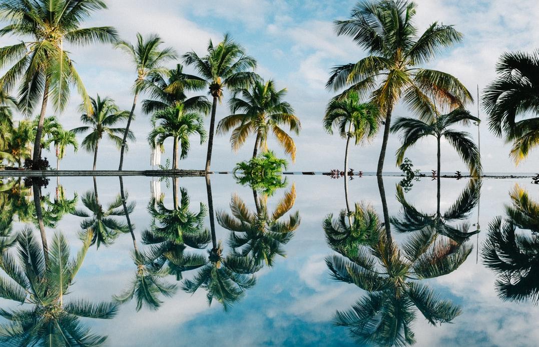 trees in mauritius