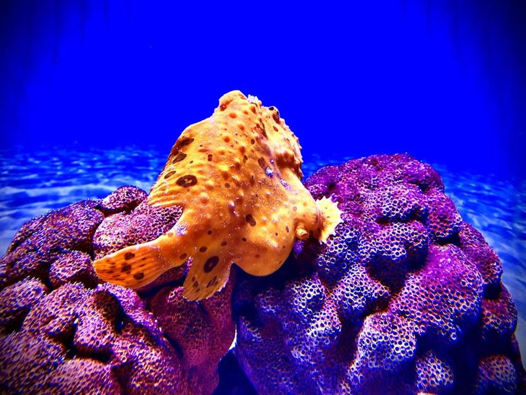 fish at two oceans aquarium