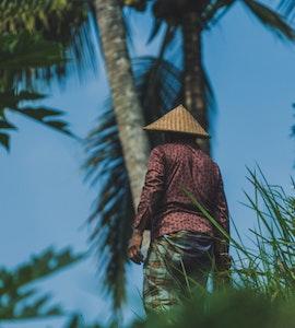 Tegallalang Rice Terrace in Bali