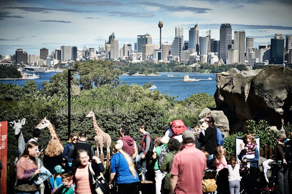 Sydney city view from Taronga Zoo