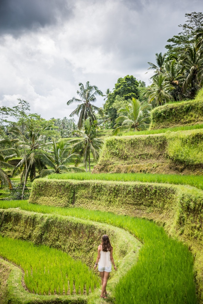 Fields at Tegallalang Rice Terrace