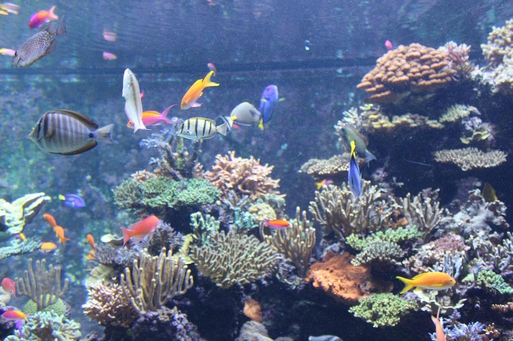 Marine life at SEA aquarium