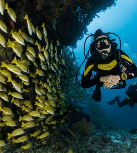 Scuba diving in Fua Mulaku