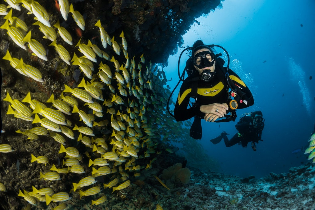 A man scuba diving and fishes at his side