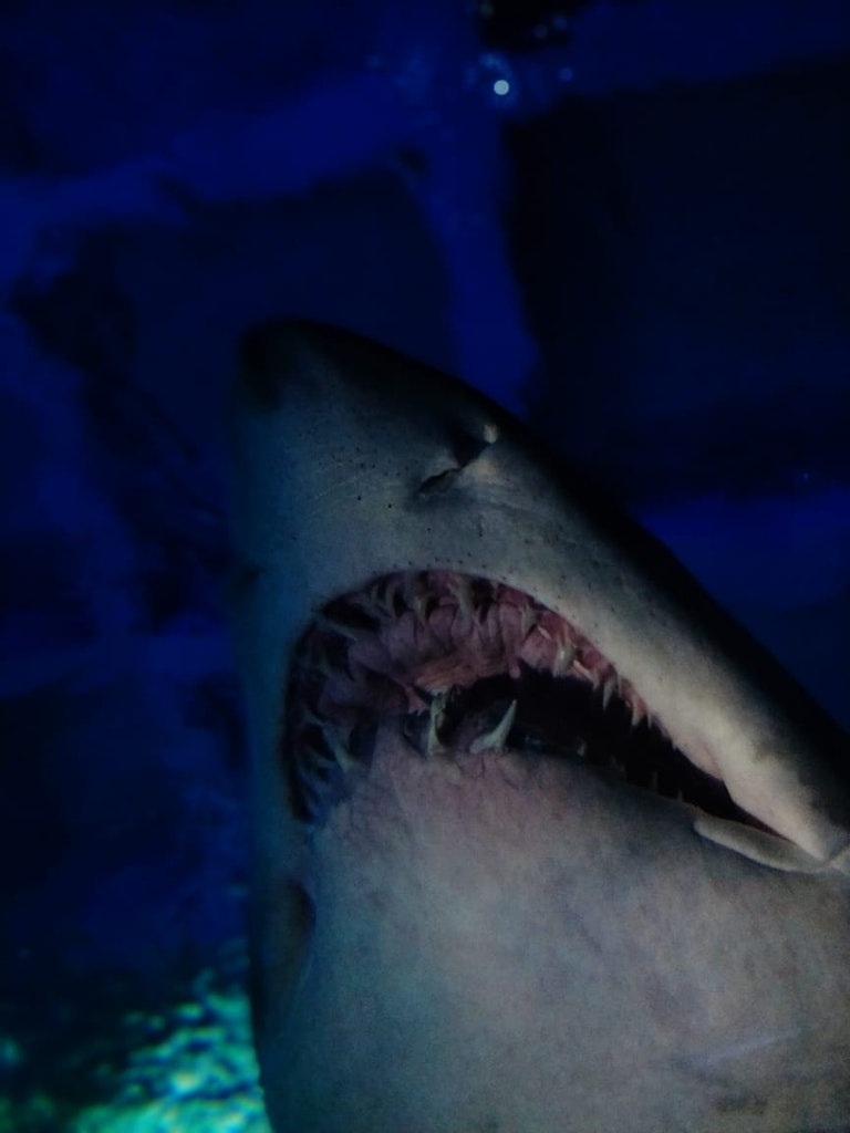 shark at the sea life aquarium