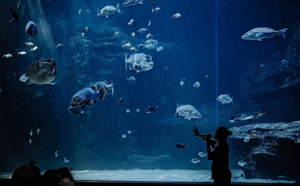 fishes at two oceans aquarium