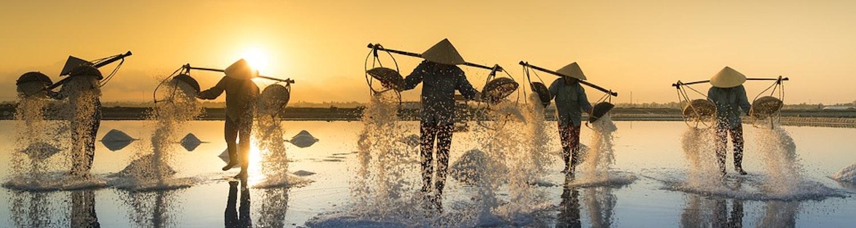 vietnam salt harvesting
