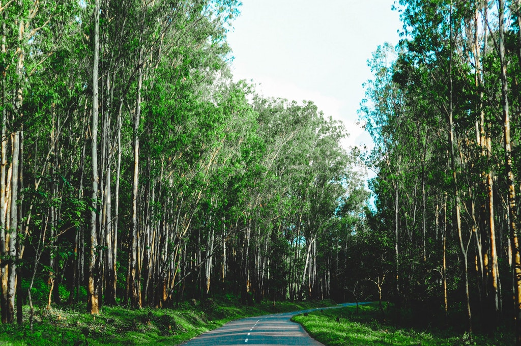Road in Wayanad, one of the top places in Kerala