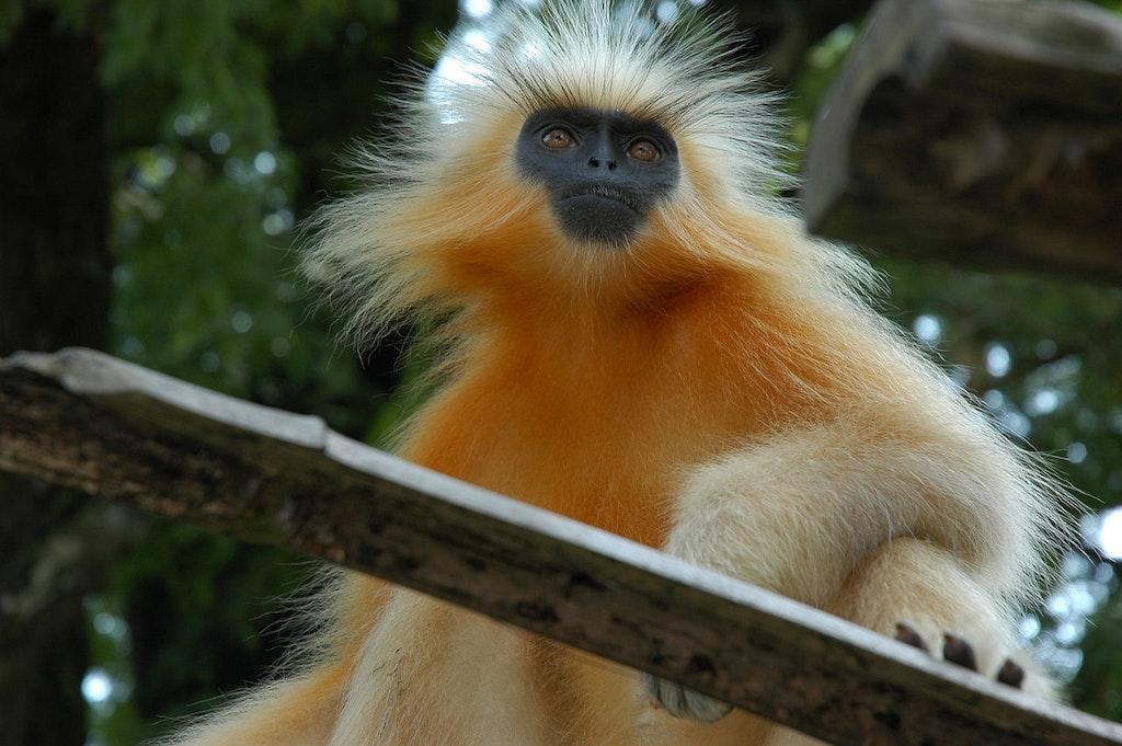 Chakrashila Wildlife Sanctuary