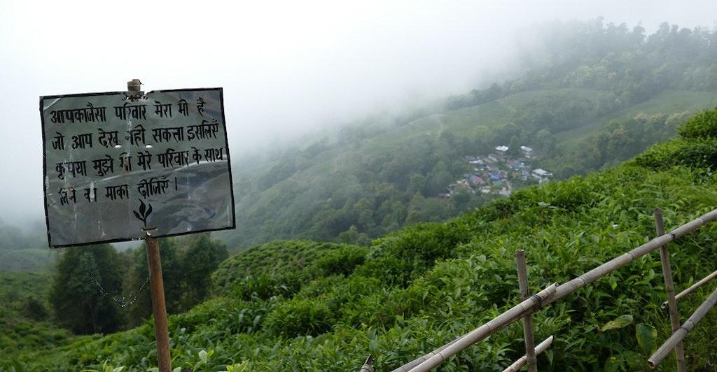 A tea garden in Darjeeling, the queen of hills