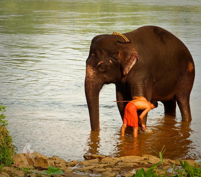 Kodanad Elephant Training Centre