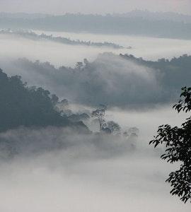 Danum Valley in Borneo