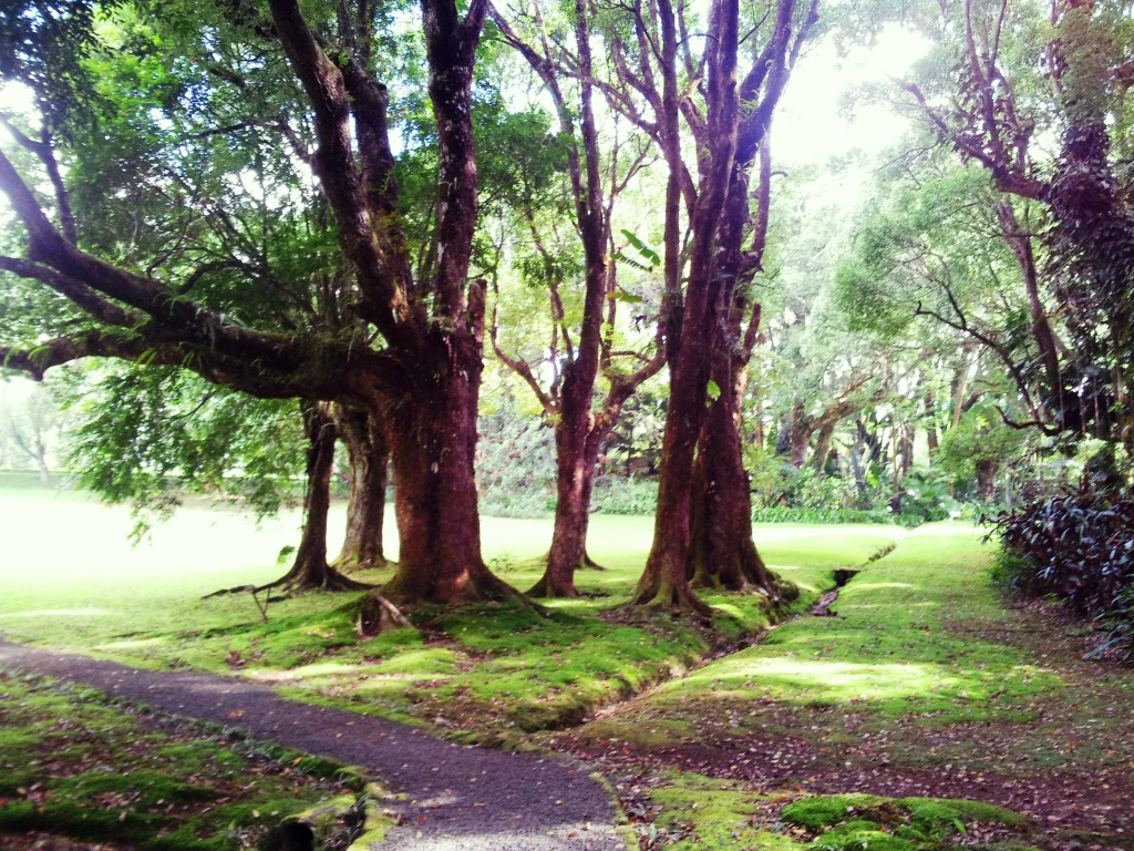 A picture that was taken in the gardens of Curepipe