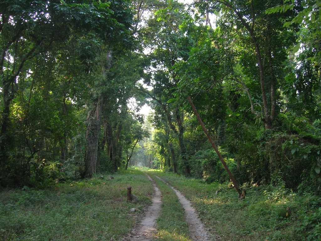 An amazing view of the dense forest at Gorumara National Park