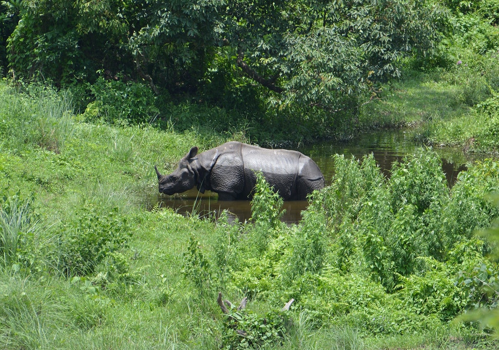 A picture of a rhinoceros that was taken at Gorumara National Park