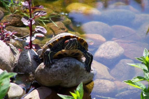 Kosgoda Turtle Conservation