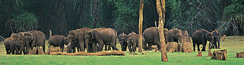 Periyar Wildlife