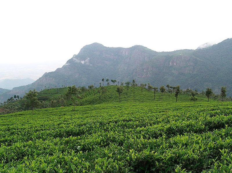 Tour of Coffee Plantation