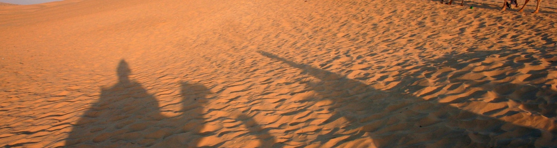 Camels in Thar desert