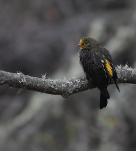A picture of a bird sitting on one of the branches in Eagle's Nest Wildlife Sanctuary