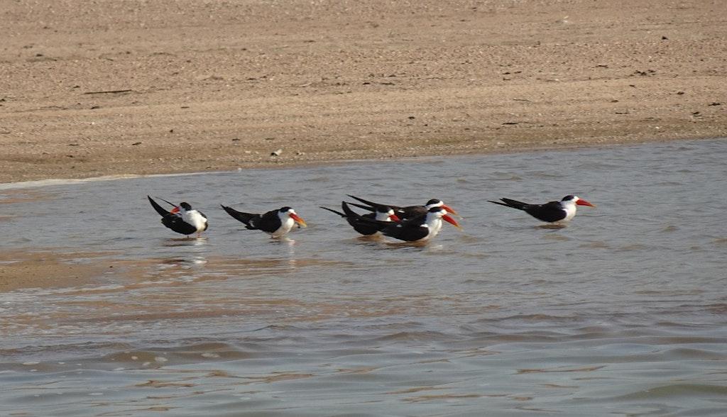 Birds of National park