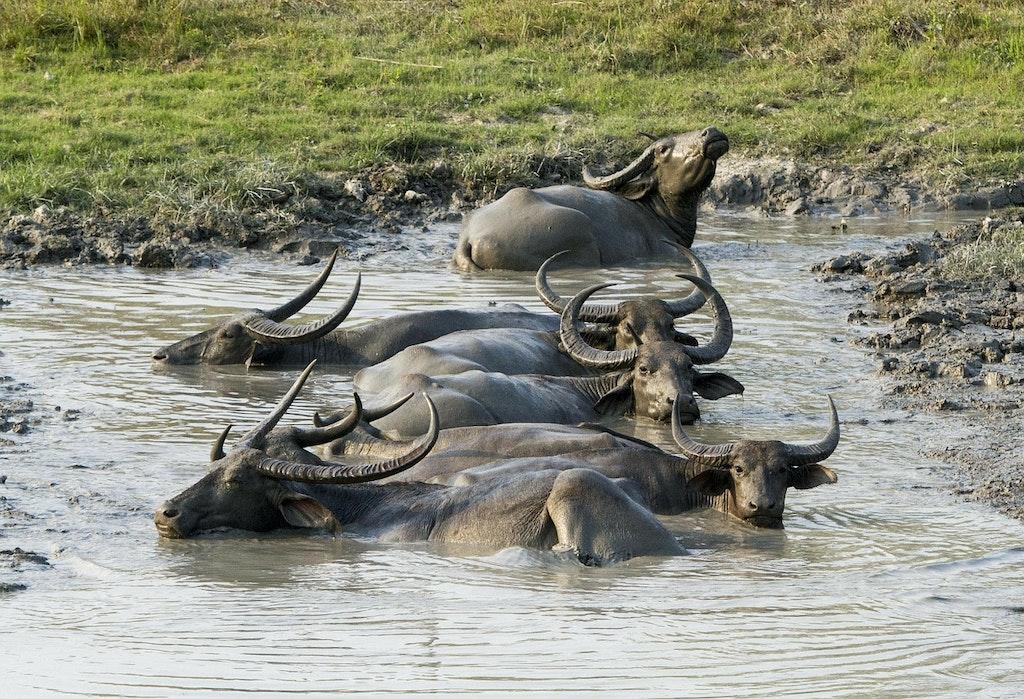 Wildlife Sanctuaries In Assam