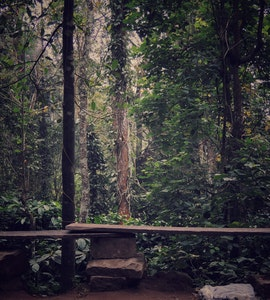 Forest view in Wayanad