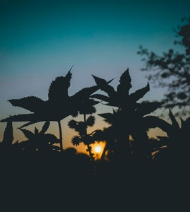 A beautiful silhouette picture of trees in Assam