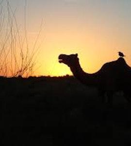 Sunset in Thar desert