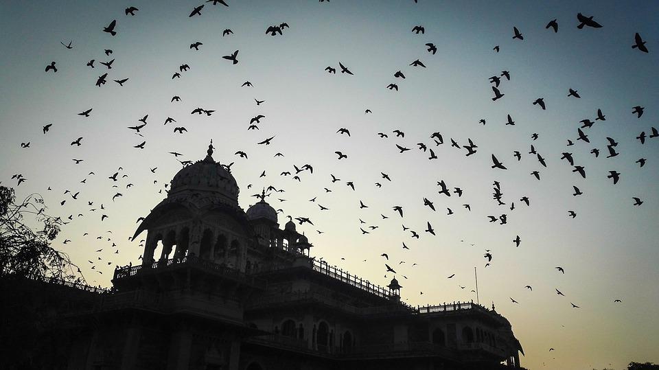 Jaipur evening