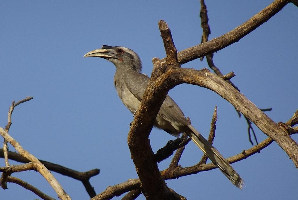Hornbill Jaipur