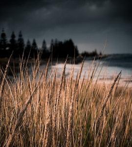 An amazing picture taken at Esperance in Australia