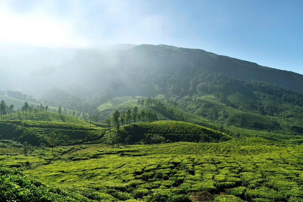 A breathtaking view of nature in Munnar in Kerala
