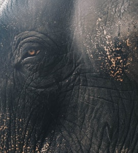 Wild elephant in Kerala