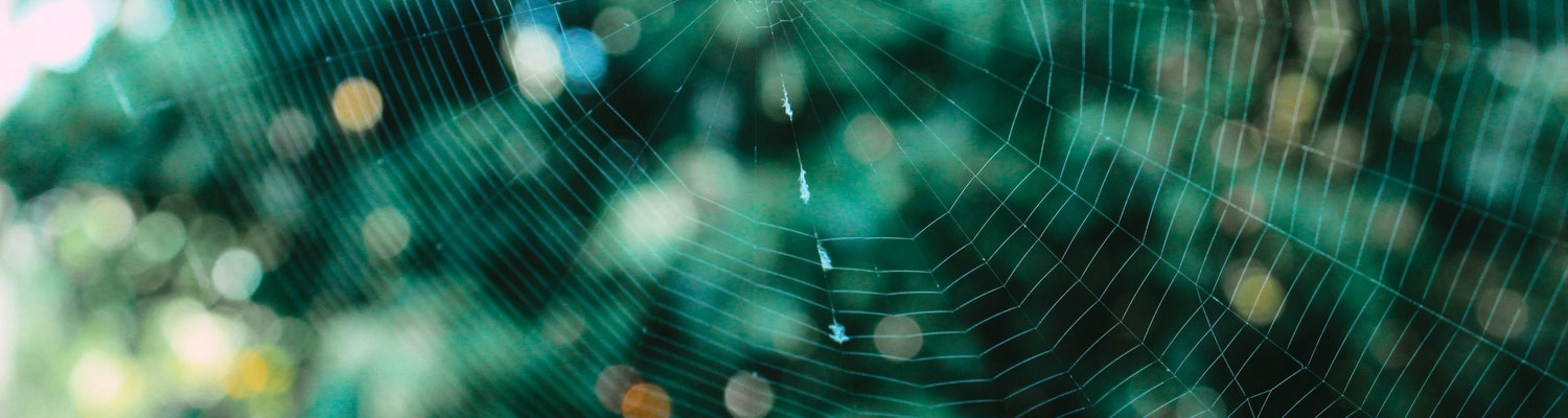 An amazing picture of an insect web in Kerala