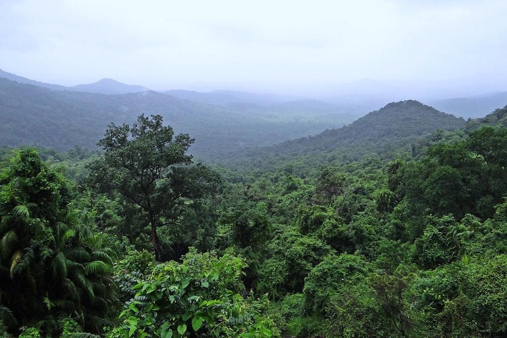 Dense forests of National park