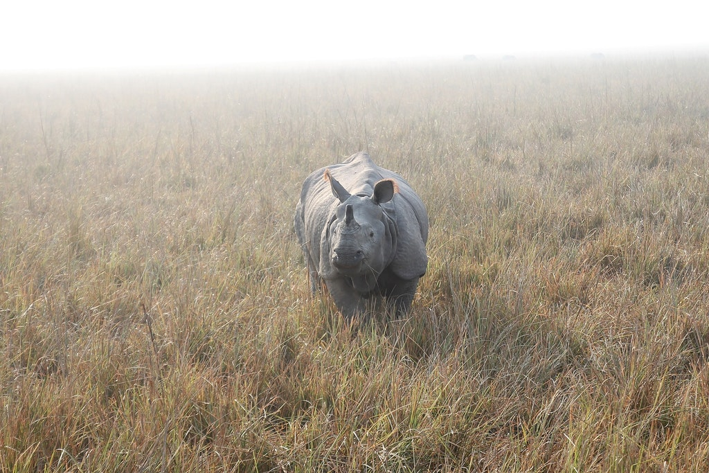 Kaziranga National Park, One of the best tourist places in Assam.