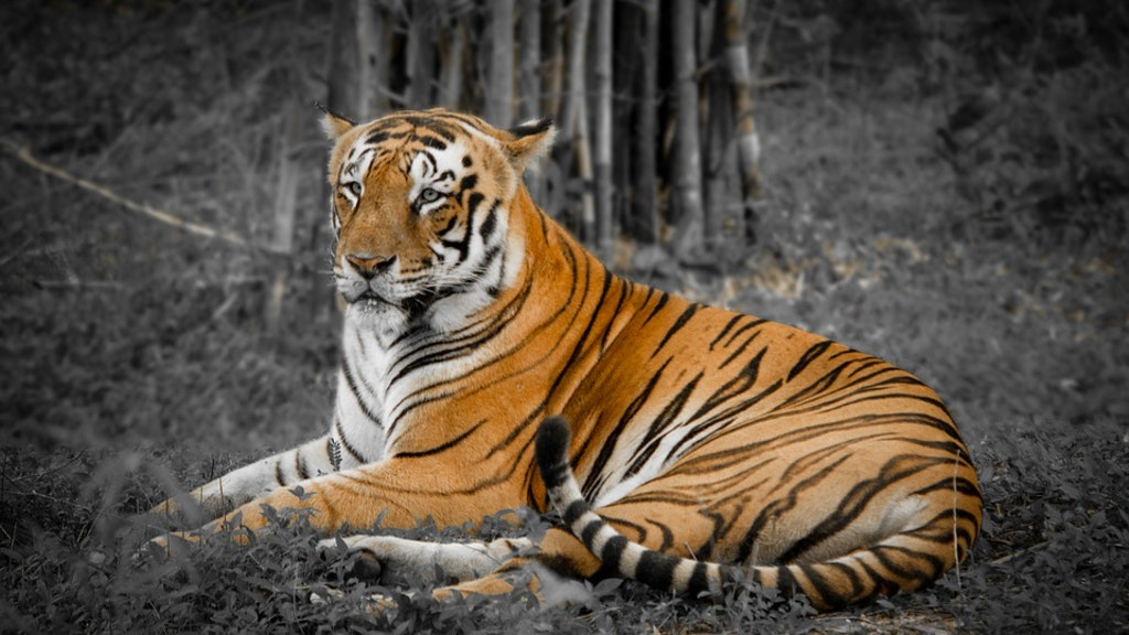 National park tigers