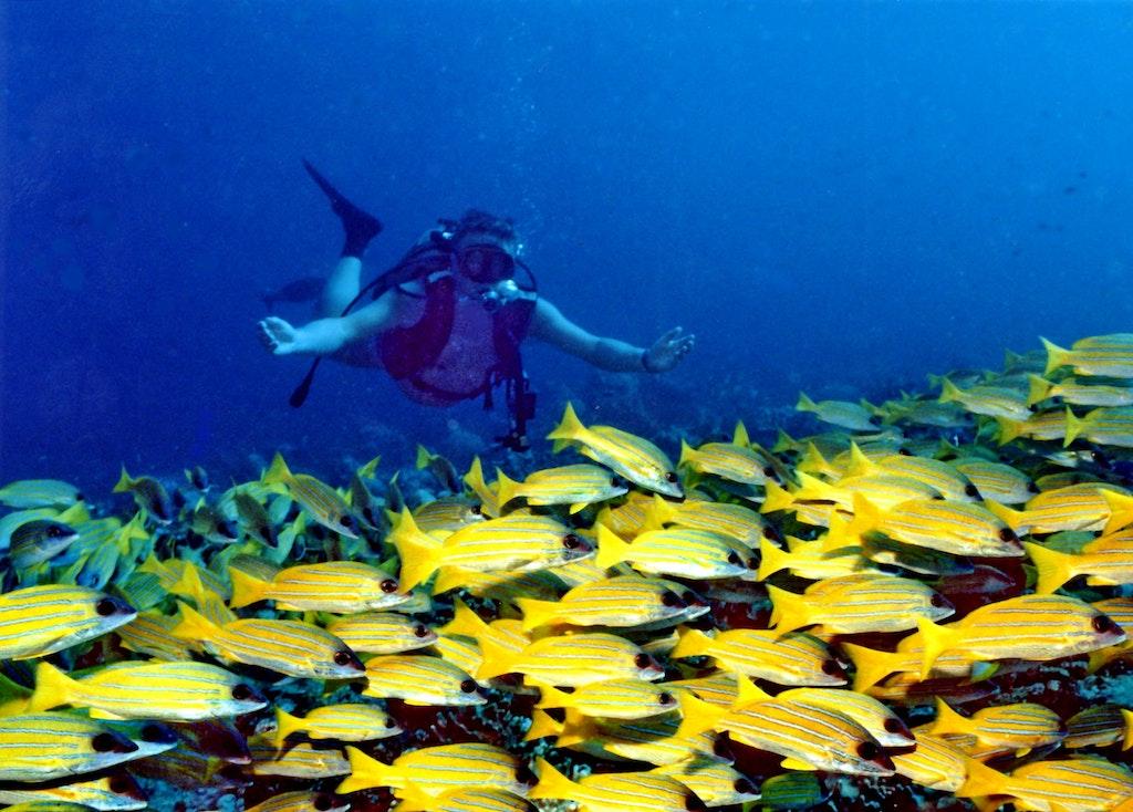 A person enjoying a watersport at Banana Reef