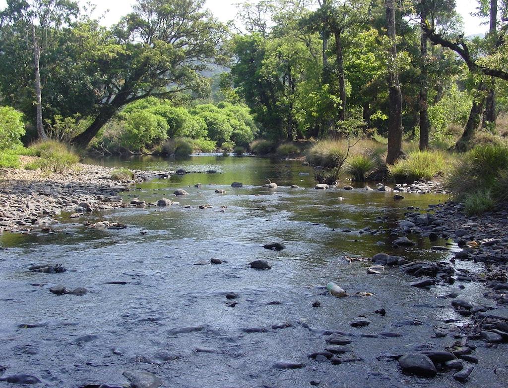 Bhadra River