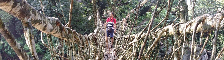 longest living root bridge in Cherrapunjee