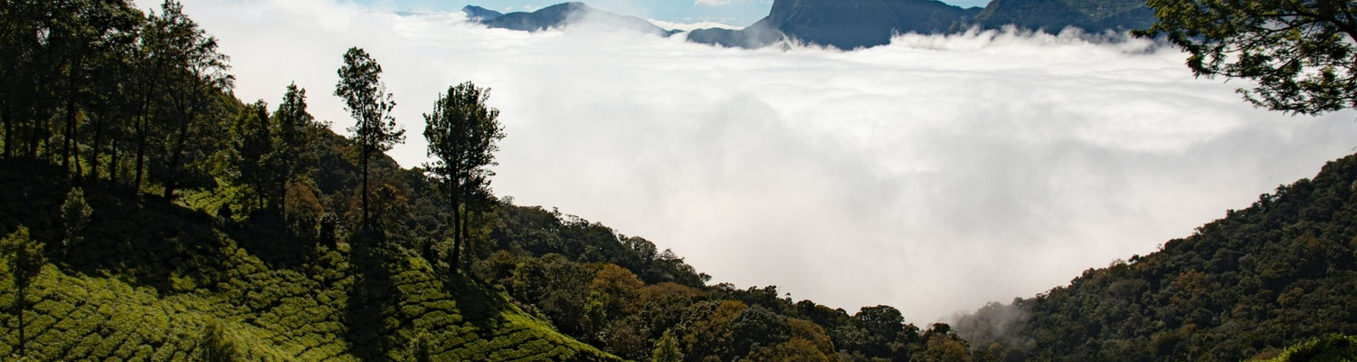 A scenic view in Munnar
