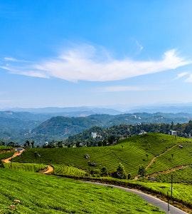 tea plantations in kerala