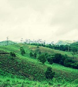 Valley in Thekkady