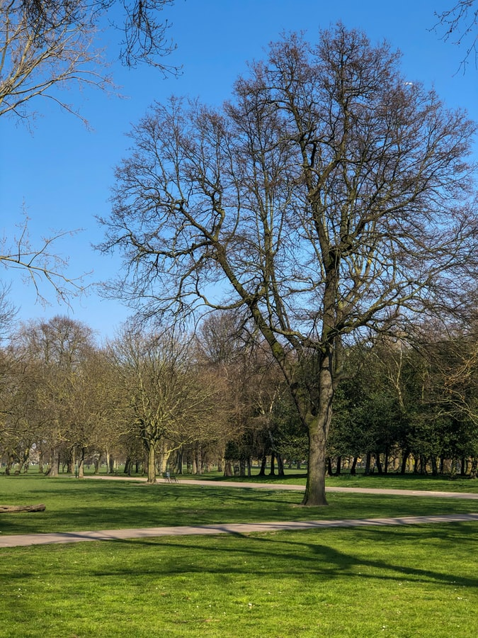 trees in the Victoria park