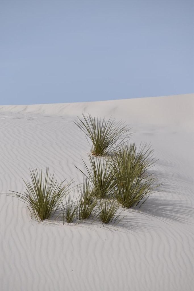 plants in sand desert