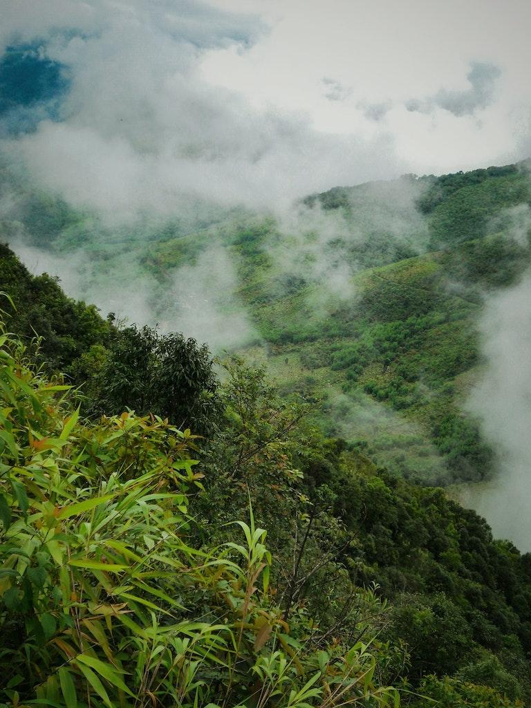 Greenery of Mawlynnong in Meghalaya