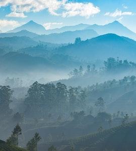 Misty view of Thekkady