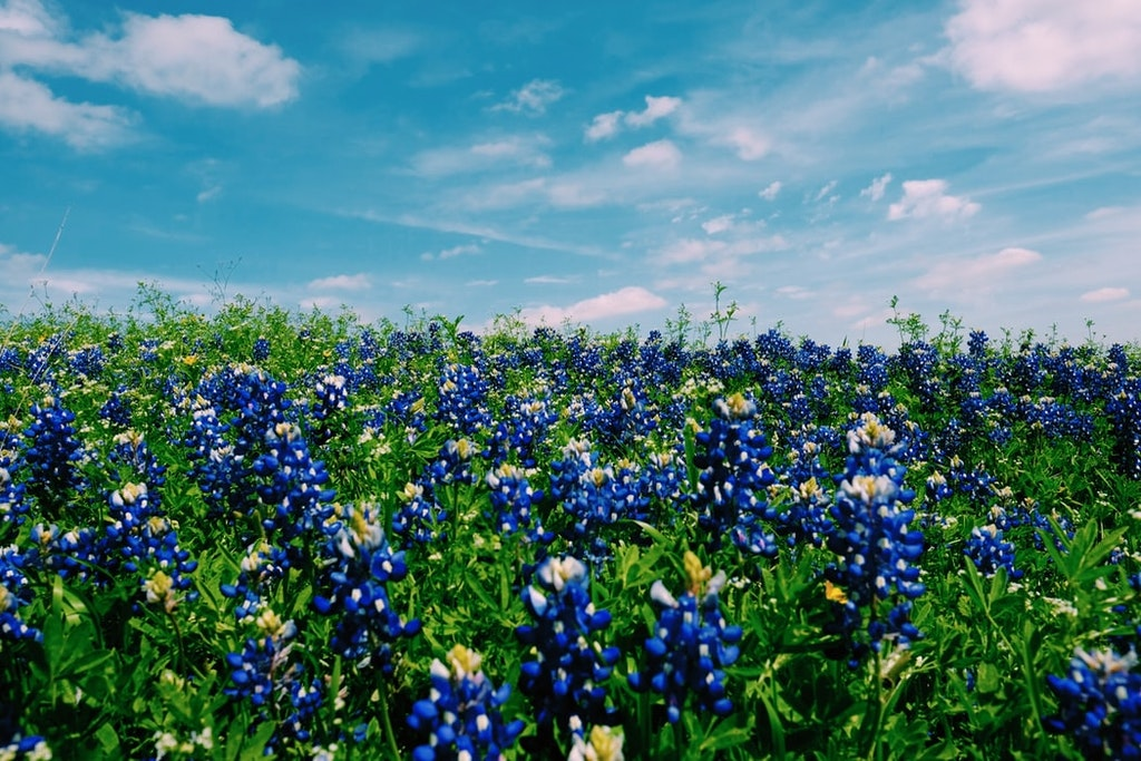 flower garden in Texas
